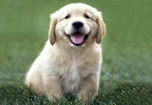 social-media-puppy